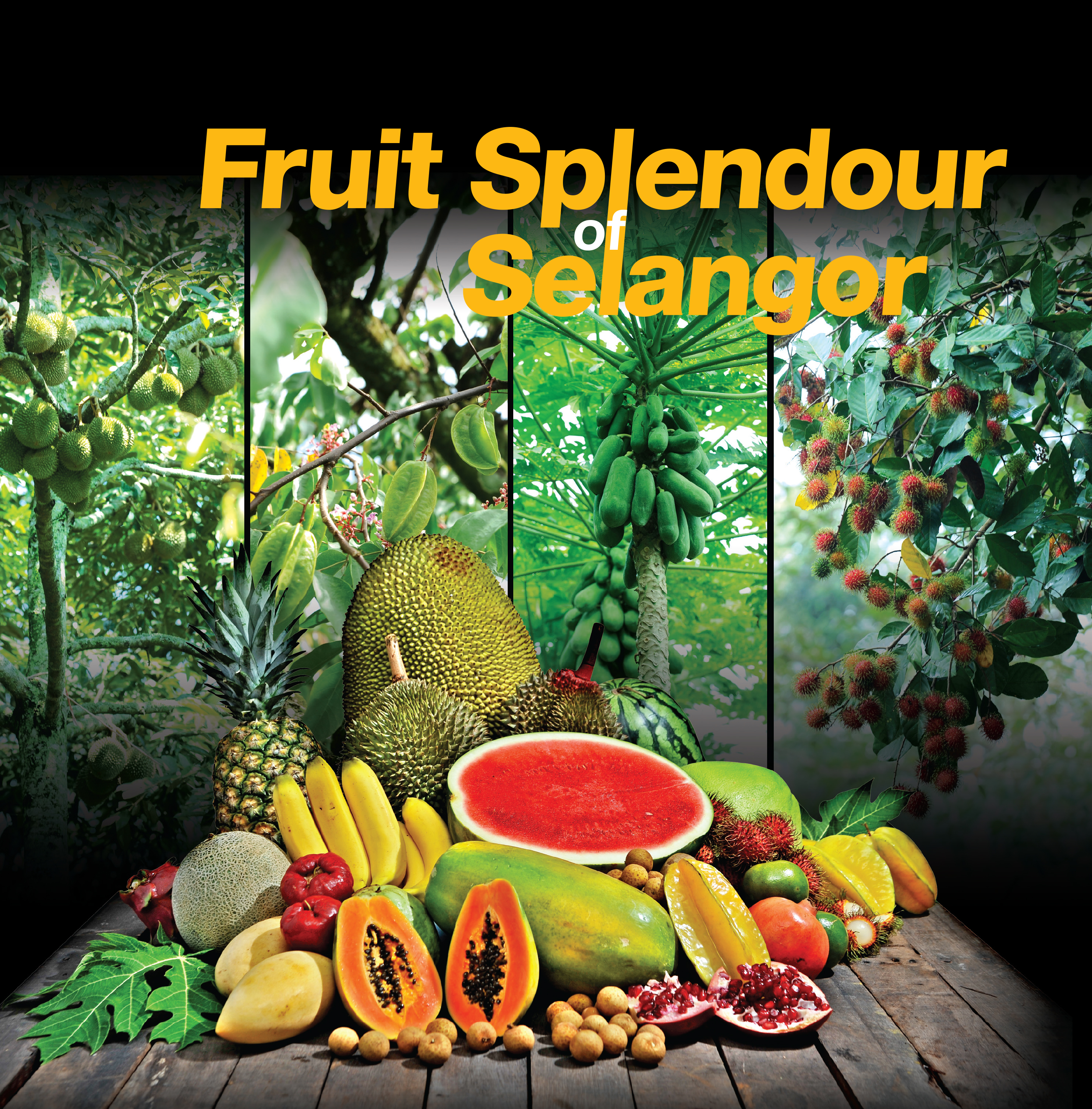 fruits of malaysia+essay Malaysian fruits are becoming very popular with an increasing number of people  some of the more popular malaysian fruits are pineapple, durian, watermelon,.